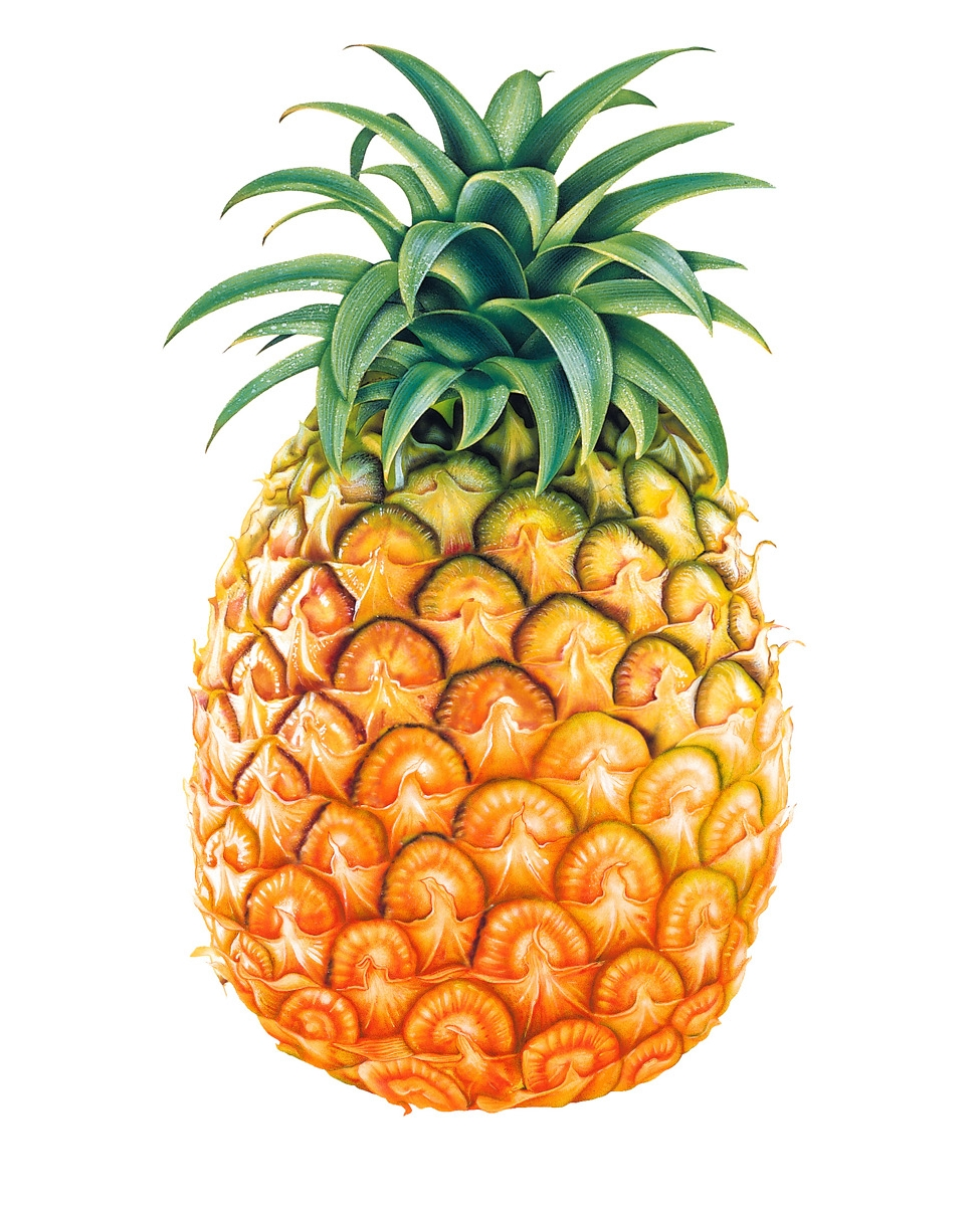 Ananas Dessin Png 2 Png Image