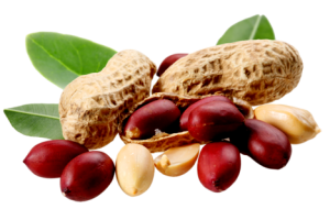 cacahuète png 2