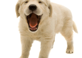 cute dogs png