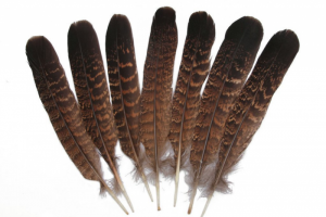 eagle feather png 2