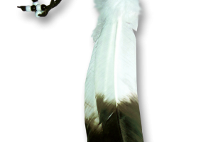 eagle feather png 3