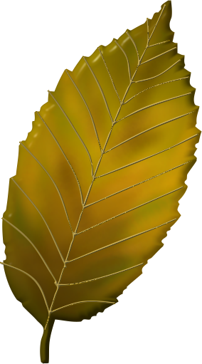 Feuille Arbre Png 1 Png Image