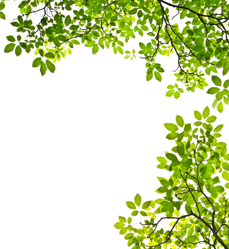 Feuille Arbre Png 6 Png Image