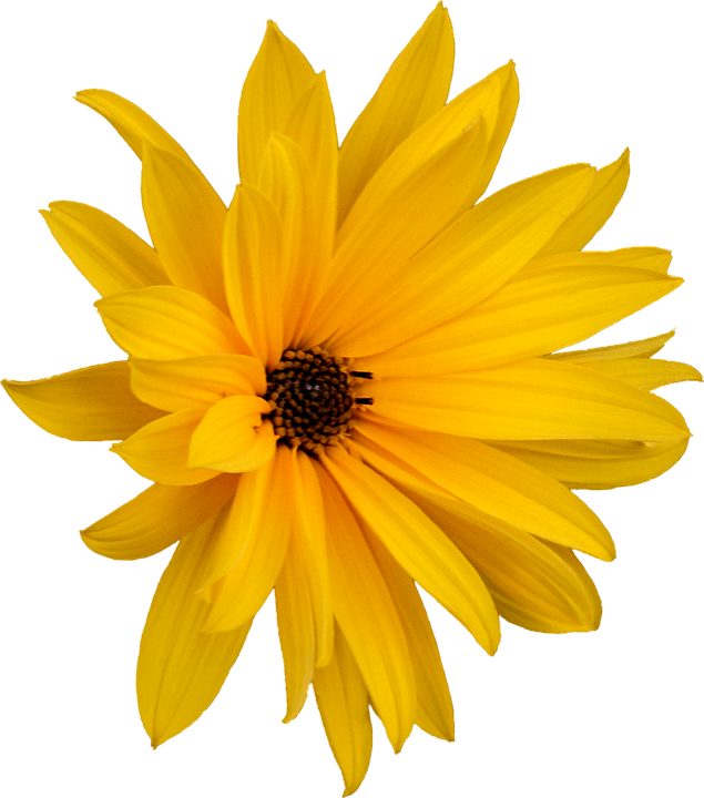 Fiori Gialli Png.Fiore Giallo Png 3 Png Image
