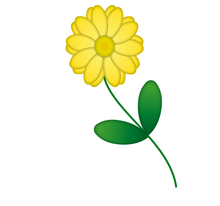 Fiori Gialli Png.Fiore Giallo Png 5 Png Image