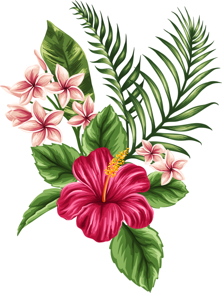 Fiori Hawaii.Fiori Hawaii Png 7 Png Image