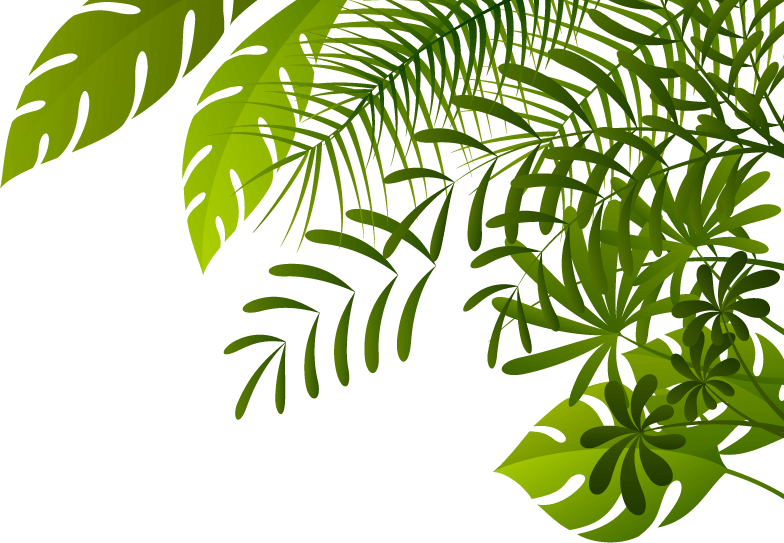 jungle background png 1 png image