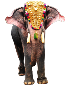 Download Kerala Elephant Png Hd Png Gif Base All elephant clip art are png format and transparent background. download kerala elephant png hd png