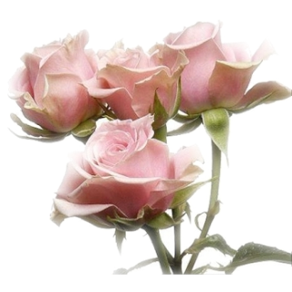 Pink flower png tumblr png image pink flower png tumblr mightylinksfo