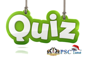quizz png 8