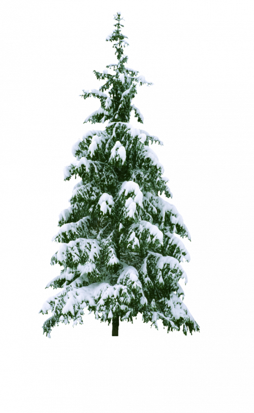Sapin Enneigé Png 4 Png Image