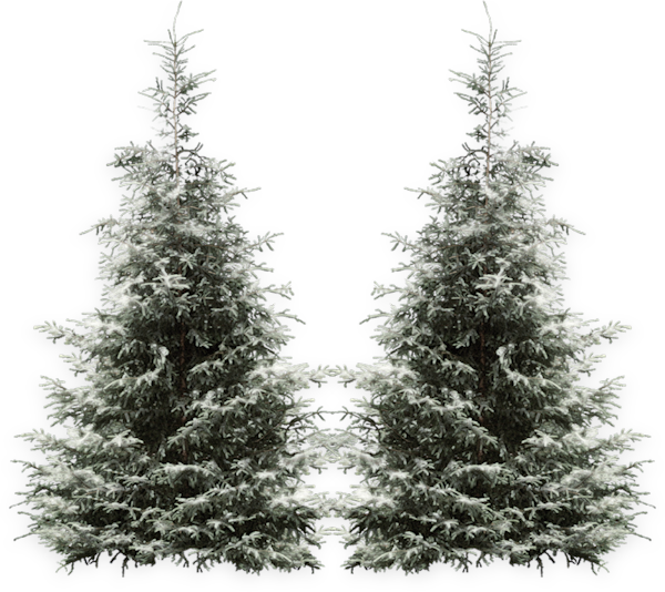 Sapin Enneigé Png 5 Png Image