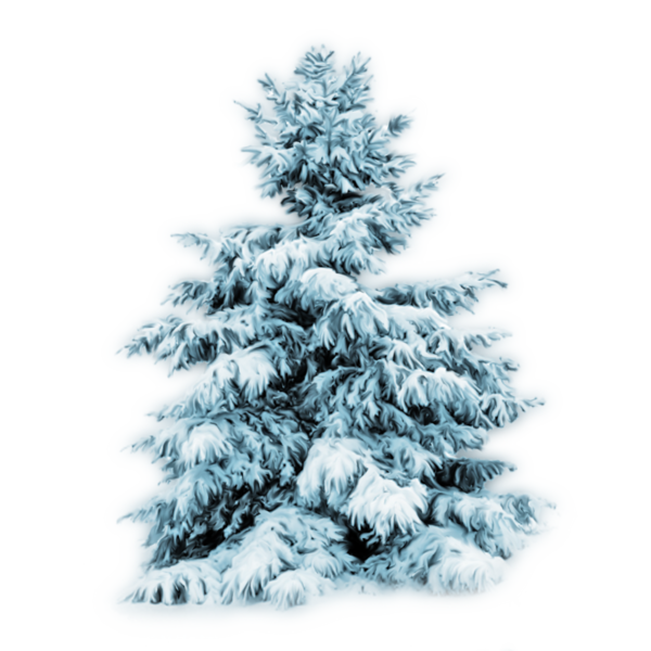 Sapin Enneigé Png 7 Png Image