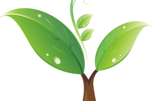 seedling clipart png 3