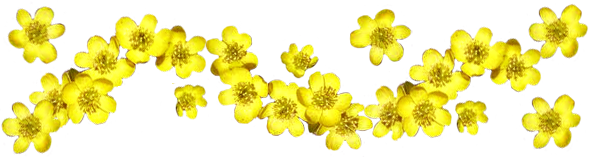 Spring Flowers Border Png 1 Png Image