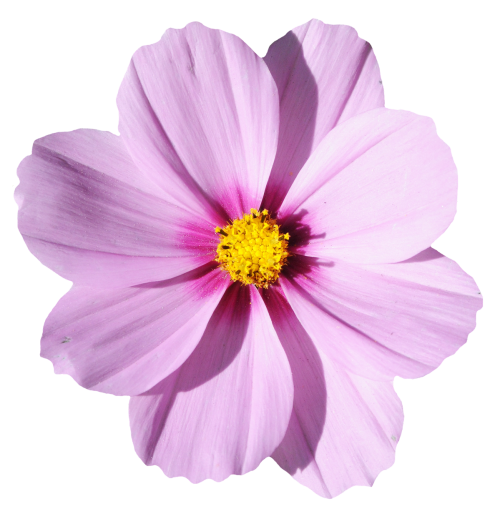 Transparent Flower Png 1 Png Image