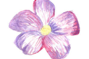 Tumblr Flores Png 5 Png Image