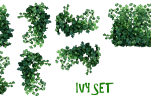 wall plants png