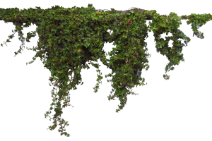 wall plants png 4