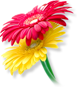 Flower Png Images