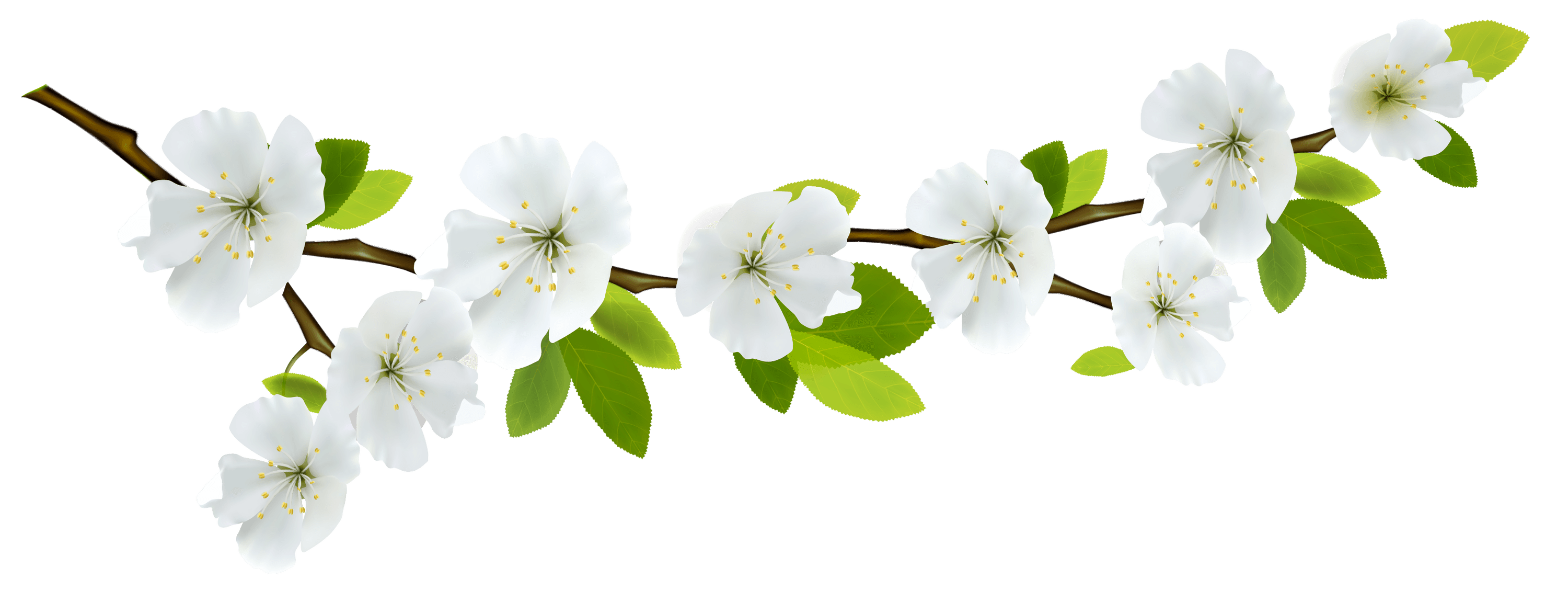 White Flowers Png Png Image