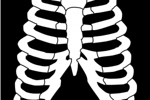 xray clipart png 1