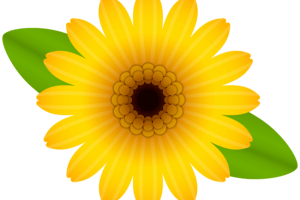 daisy png transparent