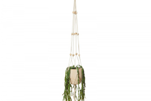 hanging plant png