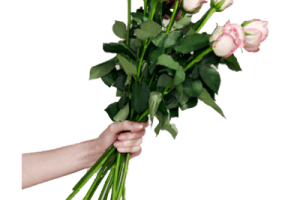 rose transparent png