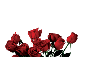 rose transparent png 4