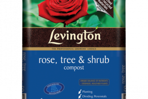 rose tree png 2