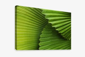 fronds png