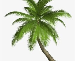 fronds png 1