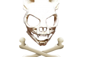 wolf skeleton png 1
