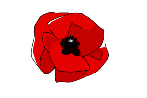 remembrance day transparent background poppy png