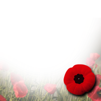 remembrance day transparent background poppy png 1