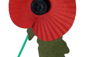 remembrance day transparent background poppy png 2